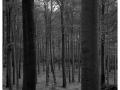 2011-10-09-4x5 Jizerky Cerny Potok Polednik_Scan-111008-0005_4x5-Ilford_Fp4_Rodinal-1-50