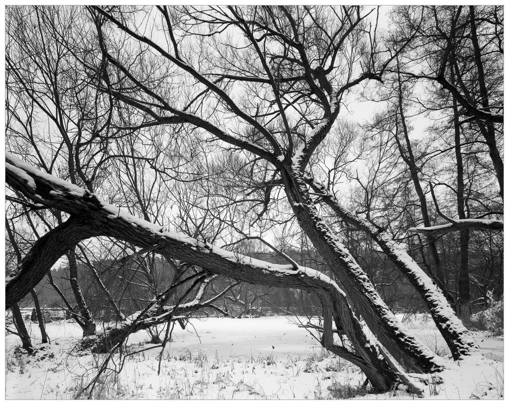 2013-02-22 8x10 Podhradi baziny_Scan-130223-0002_8x10_Foma_100_TMax_1-4