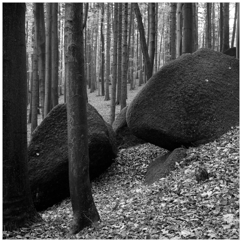 2014-10-XX 6x6 Jizerky s detmi_Scan-141115-0008_6x6_Fuji_Neopan_400_TMax_1-7