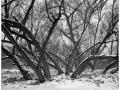 2013-02-22 8x10 Podhradi baziny_Scan-130223-0003_8x10_Foma_100_TMax_1-4