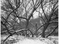 2013-02-22 8x10 Podhradi baziny_Scan-130223-0005_8x10_Foma_100_TMax_1-4
