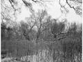 2013-02-22 8x10 Podhradi baziny_Scan-130224-0001_8x10_Foma_100_TMax_1-4