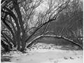 2013-02-22 8x10 Podhradi baziny_Scan-130224-0003_8x10_Medix_100_TMax_1-4