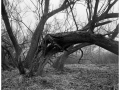 2013-03-10 8x10 Podhradi baziny_Scan-130317-0001_8x10_Foma_100_Xtol_1_1