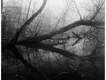 2013-03-10 8x10 Podhradi baziny_Scan-130317-0002_8x10_Foma_100_Xtol_1_1