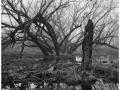 2013-03-10 8x10 Podhradi baziny_Scan-130317-0003_8x10_Foma_100_Xtol_1_1