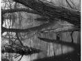2013-03-10 8x10 Podhradi baziny_Scan-130317-0004_8x10_Foma_100_Xtol_1_1