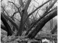 2013-03-10 8x10 Podhradi baziny_Scan-130317-0005_8x10_Foma_100_Xtol_1_1