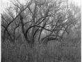 2013-03-10 8x10 Podhradi baziny_Scan-130317-0006_8x10_Foma_100_Xtol_1_1