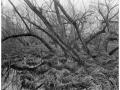2013-03-10 8x10 Podhradi baziny_Scan-130317-0007_8x10_Foma_100_Xtol_1_1