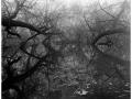 2013-03-10 8x10 Podhradi baziny_Scan-130317-0008_8x10_Foma_100_Xtol_1_1