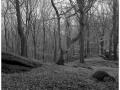2014-11-09 6x6 Loupeznicka jeskyne_Scan-141116-0004_6x6_Fuji_Neopan_400_TMax_1-7